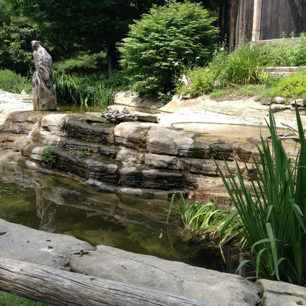 Fountain outside raptor exhibit at Maine Wildlife Park