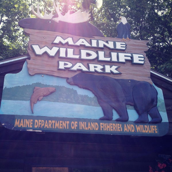 Maine Wildlife Park Admission