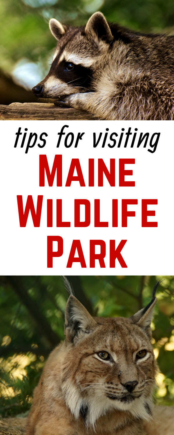 Maine Wildlife Park