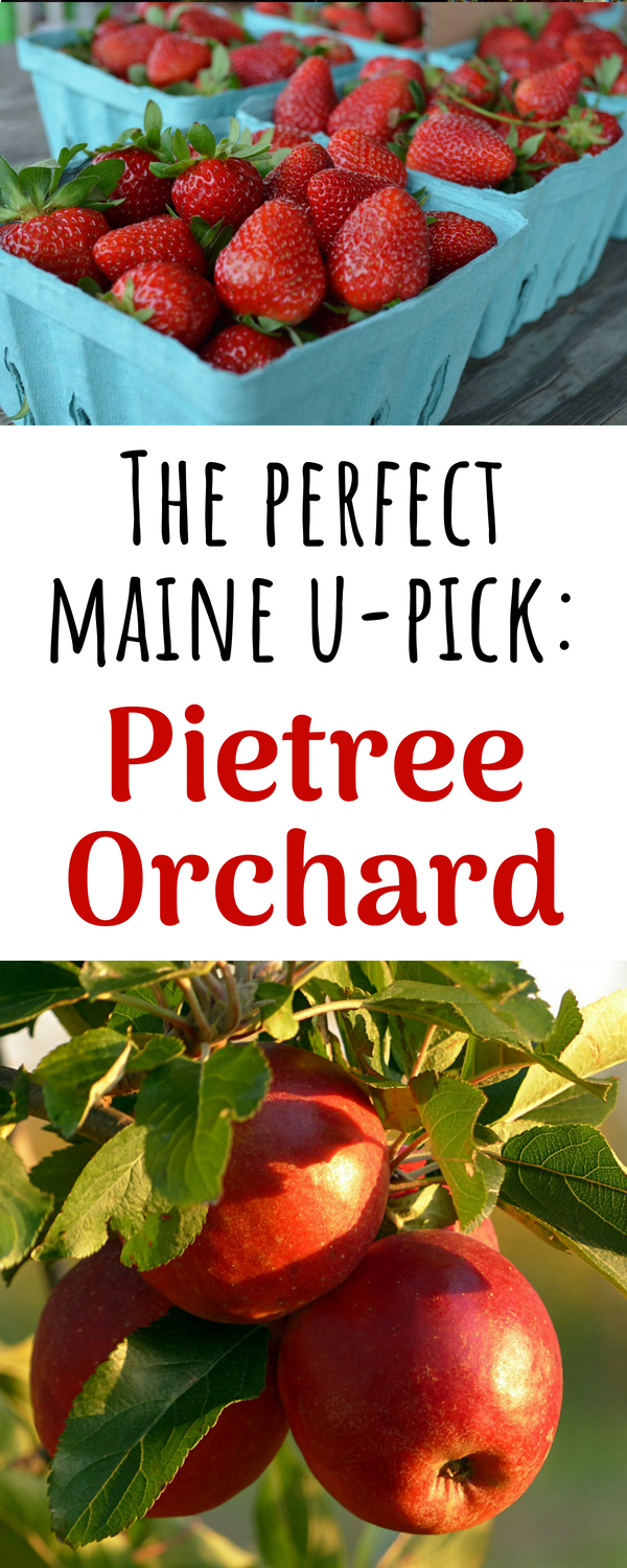 Pietree Orchard in Sweden Maine
